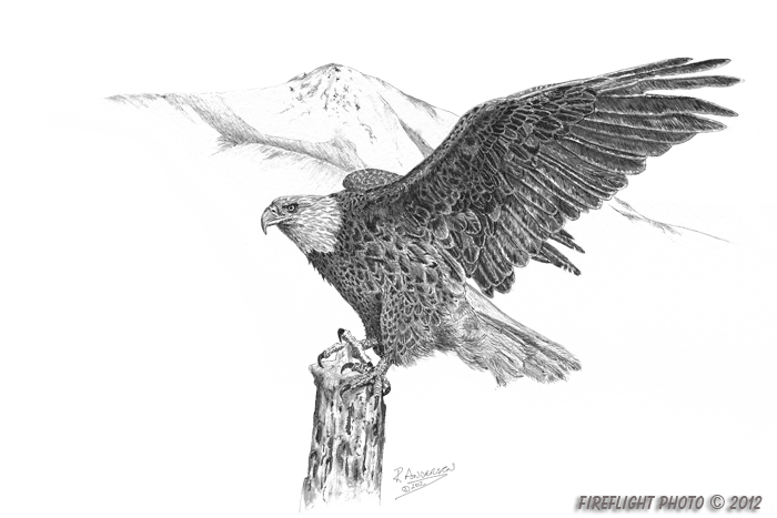 wildlife;Eagle;Bald Eagle;Art;Artwork Drawing;Ink Drawing