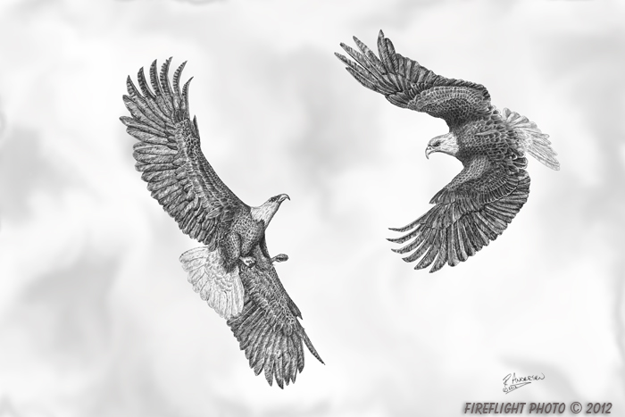 wildlife;Bald Eagle;Eagle;Sky;Littleton;NH;Ink;Ink Drawing;Art;Artwork Drawing;Drawing