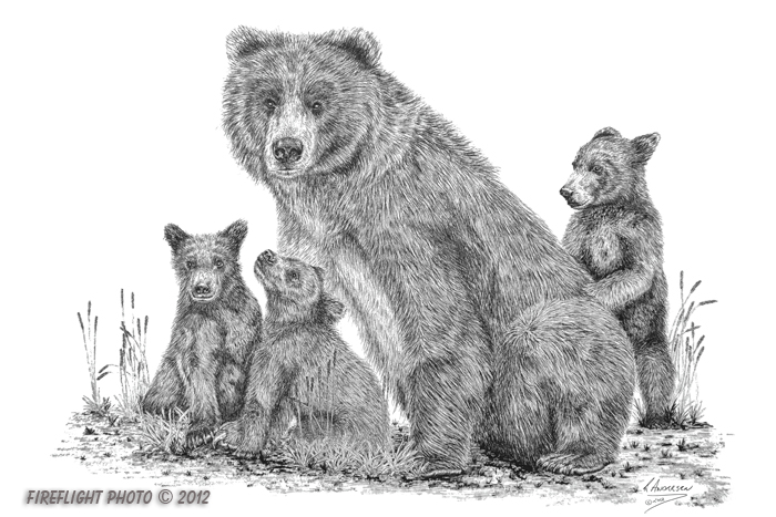 wildlife;Bear;Grizzly Bear;Cubs;Pen and Ink;Ink Drawing;Art;Artwork;Drawing