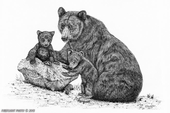 wildlife;Bear;Black Bear;Cubs;Pen and Ink;Ink Drawing;Art;Artwork;Drawing