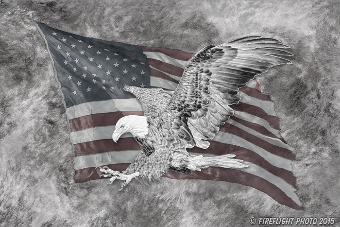 Wildlife;art;artwork;painting;drawing;Corel Painter;Bald Eagle;Eagle;Flag;grayscale