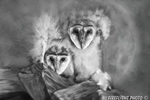 Wildlife;art;artwork;painting;drawing;Owl;Barn-Owl;Baby-Owl;Corel-Painter