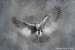 Wildlife;art;artwork;painting;drawing;Falcon;Aplomado-Falcon;Raptor;Painter