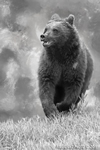 Wildlife;art;artwork;painting;drawing;Grizzly-Bear;Corel-Painter