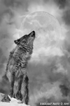 Wildlife;art;artwork;painting;drawing;Wolf;Timberwolf;Moon;Corel-Painter