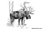 wildlife;moose;birch-trees;Art;Artwork-Drawing;ink