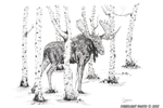 wildlife;Moose;Bull-Moose;Birch-Trees;Ink;Ink-Drawing;Art;Artwork-Drawing;Drawing
