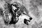 Wildlife;art;artwork;painting;drawing;Corel-Painter;Wolf;Wolves;grayscale