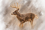 Wildlife;art;artwork;painting;drawing;Corel-Painter;Deer;Buck;Whitetail;color;colour