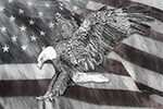 Wildlife;art;artwork;painting;drawing;Corel-Painter;Pen-and-Ink;Bald-Eagle;Eagle;Flag;grayscale
