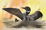 Wildlife;art;artwork;painting;drawing;Corel-Painter;loon;common-loon;color