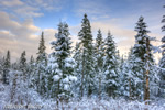 Twin-Mountains;Trees;Snow;Sunset;New-Hampshire;Winter;Photo-to-art;art;landscape