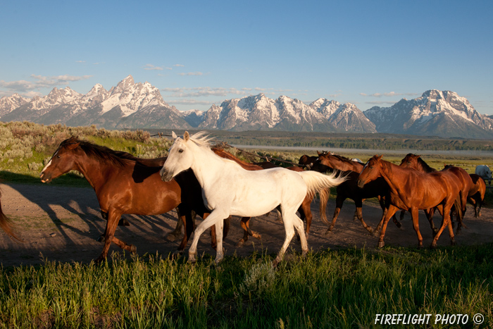 wildlife;Equus ferus caballus;horse;landscape;grand tetons;mountains;sunrise