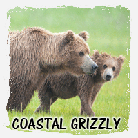 COASTAL GRIZZLY