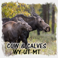 COW-CALF MOOSE