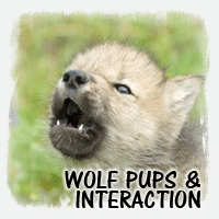 PUPS - INTERACTION