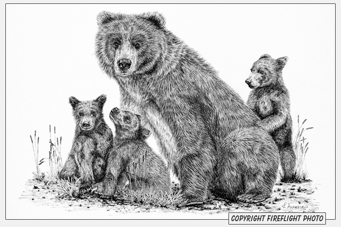 Grizzly bear cubs drawing - photo#2