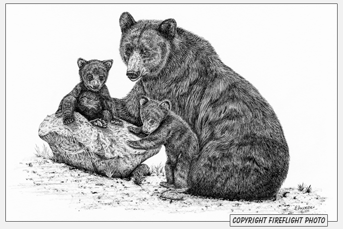 Grizzly bear cubs drawing - photo#19