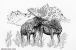 Moose Love Pen and ink Drawing