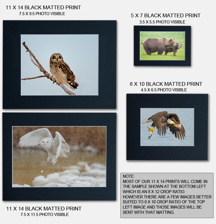 Matted Print Comparison Chart